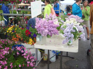 Lilacs--The Clark Fork Market, Missoula