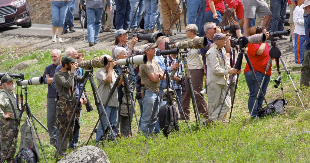 "Where one wildlife watcher stops, many more are sure to follow. While videographer Mike Dreesman drove through the park during this trip, he ""got fooled a couple of times by big crowds. A large crowd doesn't always guarantee bears or wolves."""