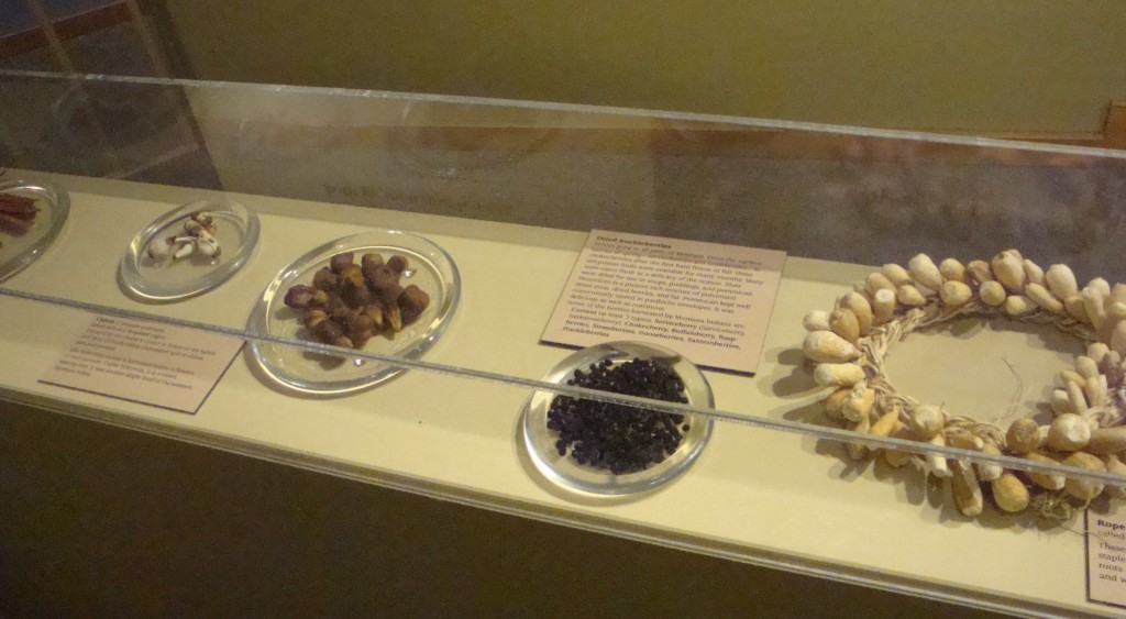 A display of some of the edible plants native to Montana at the MHS Museum, Helena. the poor quality is due to the fact that I took the picture.