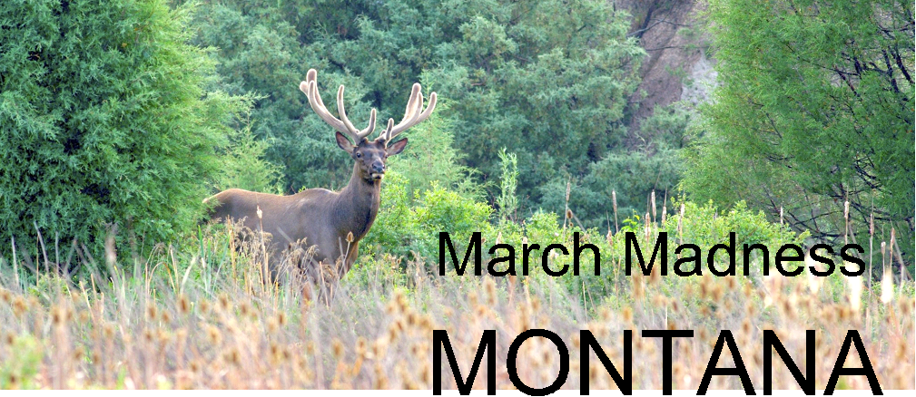 March Madness elk