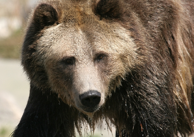 From grizzlydiscoveryctr.com