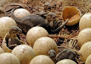 Maiasaura Nest