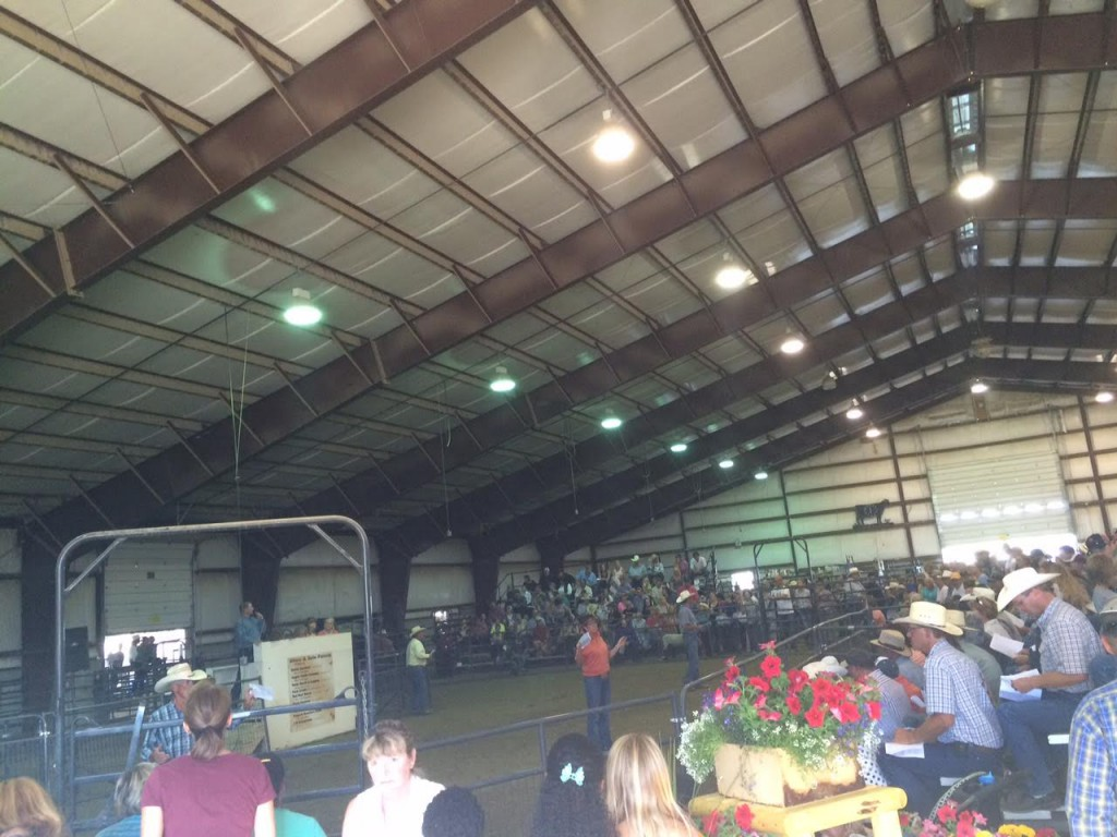 4-H Auction